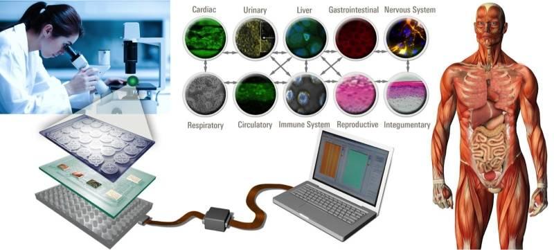 Напичкать солдат электронными чипами: затея DARPA
