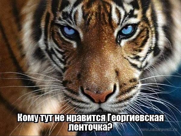 За кого проголосуют украинцы — Масштабный опрос