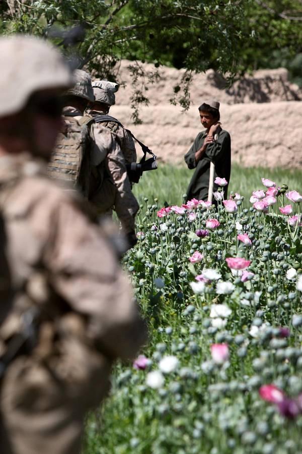 Tráfego de drogas afegão sem fronteiras