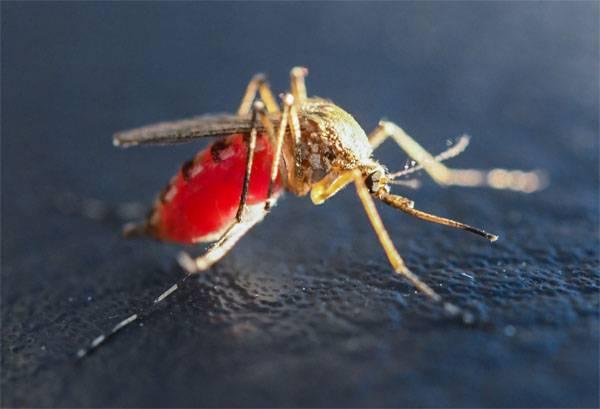 Почему военные специалисты в США заинтересовались изучением укуса комара?