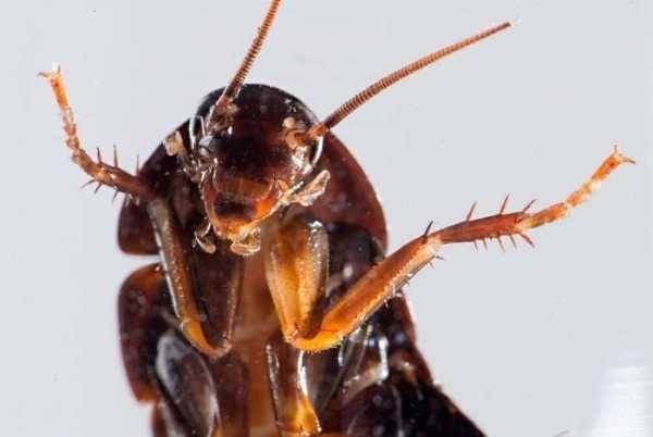Colorado Hamamböceği Notları. Herhangi bir yüz temiz bir alışveriş merkezi ile memnun olacak!