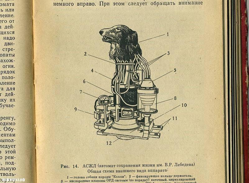 «Шторм» и двухголовые собаки. Как в СССР пытались создать биоробота