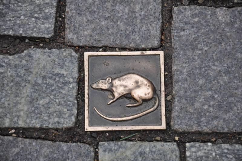 Плитка с крысой на мостовой в Гамельне