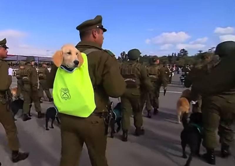 Chile veranstaltete eine Militärparade mit Welpen in Rucksäcken