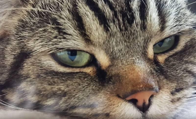 中国の科学者が感染した武漢猫を報告し、動物検疫を提供