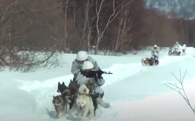 Pacific Fleet Marines ha acquisito padronanza delle abilità di slitta trainata da cani
