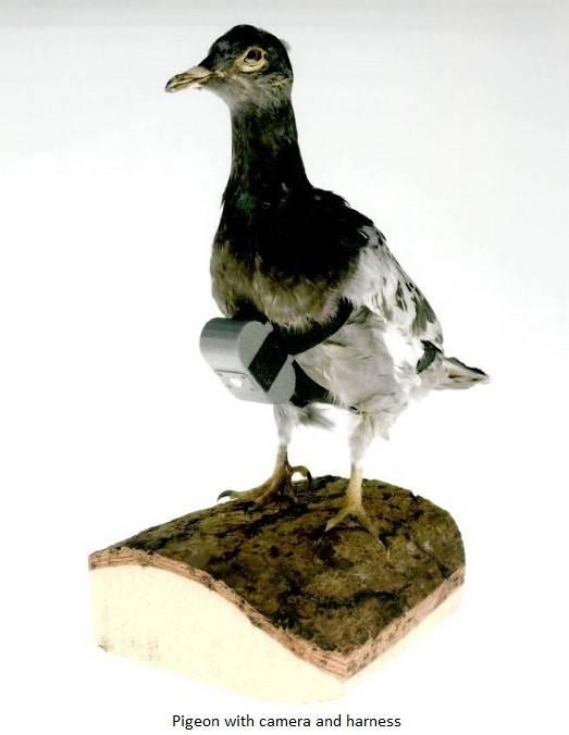 莫斯科上空的鸟。 中央情报局的间谍动物
