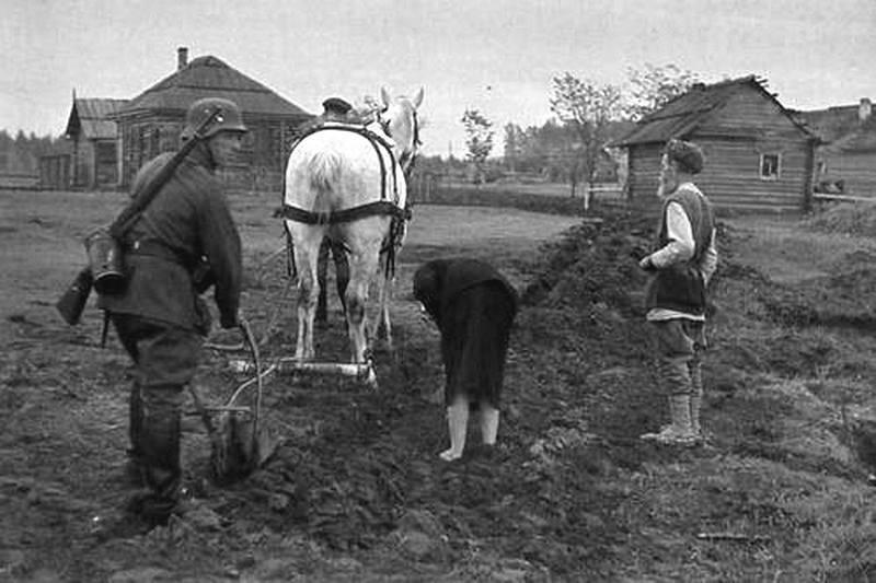 SSCB'nin işgal altındaki topraklarında ekmek hasadı ve tedariki