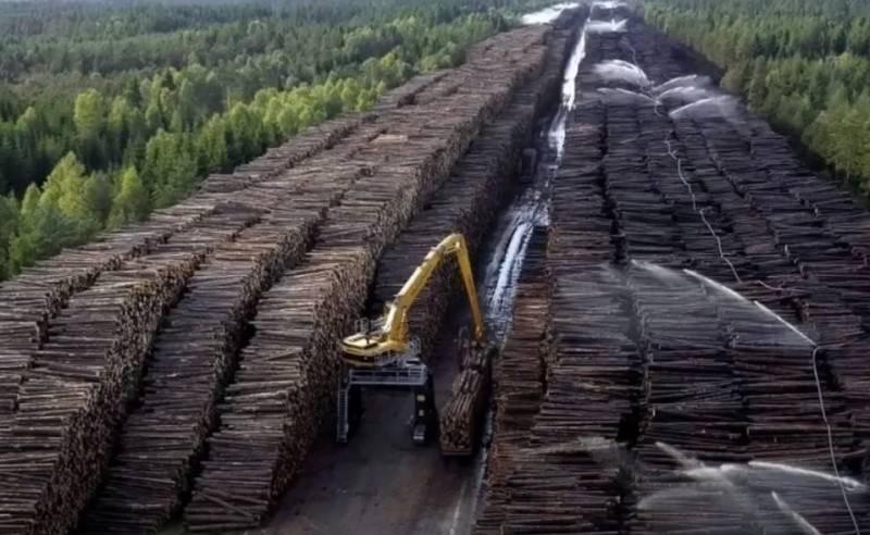 Putin ha ordinato di introdurre un divieto totale sull'esportazione di legname non lavorato dal paese