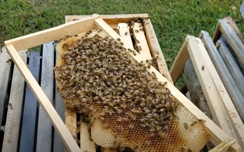 Пчел «объединили» с дронами для поиска мин на Балканах