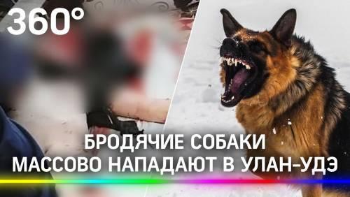 Angriff von streunenden Hunden in ulan-ud